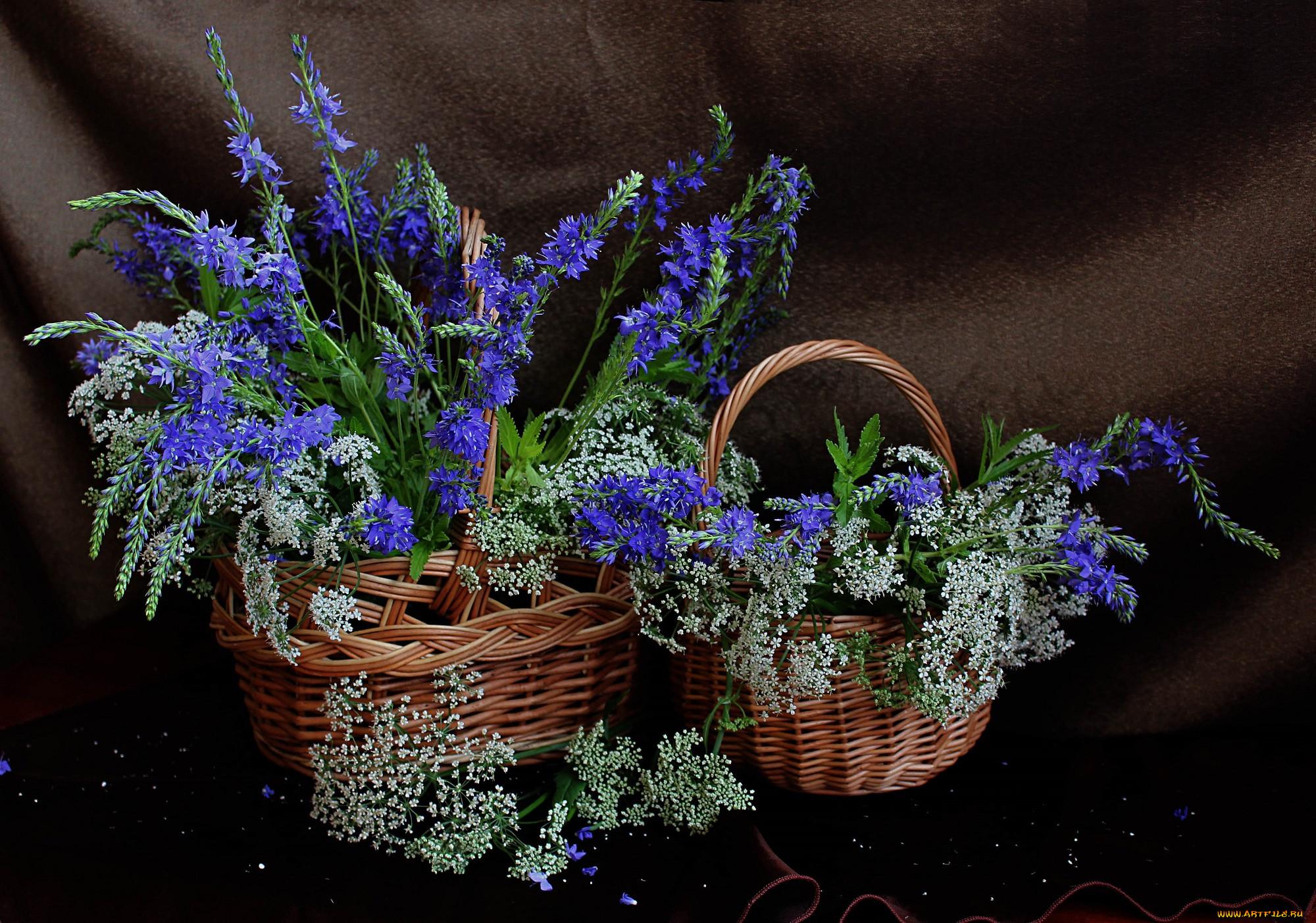 бобра рубрике полевые цветы в корзинке картинка включавшая его несколько